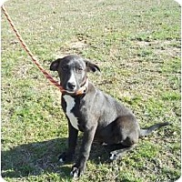 Adopt A Pet :: Ace - Adamsville, TN