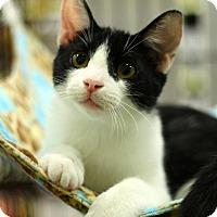 Adopt A Pet :: Max - Sacramento, CA