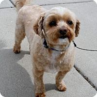 Adopt A Pet :: Peppy - Loveland, CO