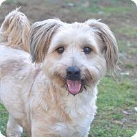 Adopt A Pet :: Amy - Tumwater, WA