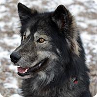 Adopt A Pet :: DALLAS - Adoption Pending - Boise, ID