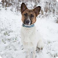 Adopt A Pet :: Ben - Drumbo, ON