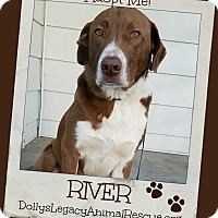 Adopt A Pet :: RIVER - Lincoln, NE