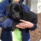 Adopt A Pet :: LD2