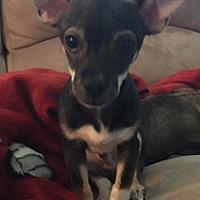 Adopt A Pet :: Dan - Corona, CA