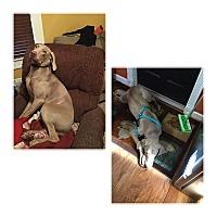 Adopt A Pet :: Diesel - East Sparta, OH