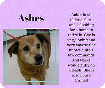 Australian Shepherd Mix Dog for adoption in Front Royal, Virginia - Ashes