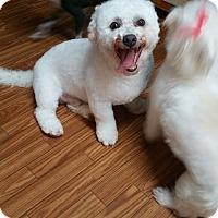 Adopt A Pet :: Mr. Bob - Crump, TN