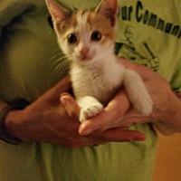 Adopt A Pet :: Fleur - Cranford/Rartian, NJ