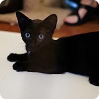 Adopt A Pet :: Sam - Staten Island, NY