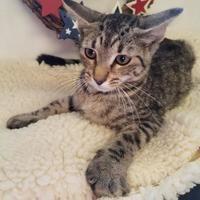 Adopt A Pet :: Storm - Brownwood, TX