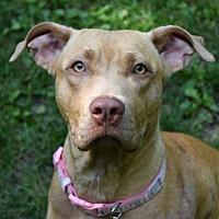 Adopt A Pet :: Tilly - Pontiac, MI