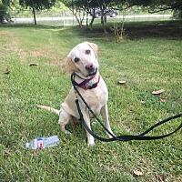 Adopt A Pet :: Mia - Jay, NY
