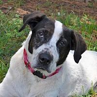 Adopt A Pet :: Freckles - Wakefield, RI
