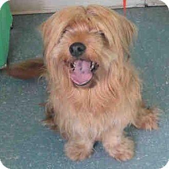 Tibetan Terrier Mix Dog for adoption in Orlando, Florida - Medalla