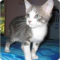 Adopt A Pet :: Ace - Mount Laurel, NJ