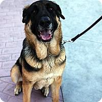 Adopt A Pet :: Morde - Gilbert, AZ