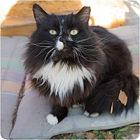 Adopt A Pet :: Zippy - Corinne, UT