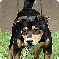 Adopt A Pet :: Bethney - Foster, RI