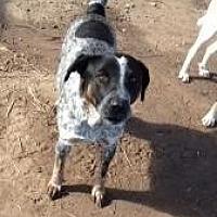 Adopt A Pet :: Jump - Quinlan, TX