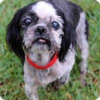 Adopt A Pet :: PEPPER - West Palm Beach, FL