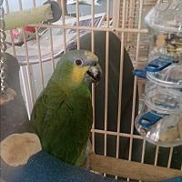 Adopt A Pet :: Orinoco