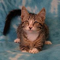 Adopt A Pet :: Patty - Eureka, CA