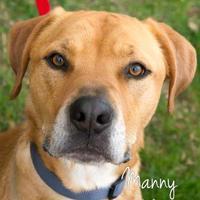 Adopt A Pet :: Manny - Cheyenne, WY