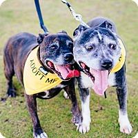 Adopt A Pet :: Mazee - Phoenix, AZ