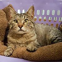 Adopt A Pet :: Gallagher - McPherson, KS