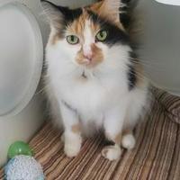 Adopt A Pet :: Bella - Seneca, PA