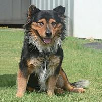 Adopt A Pet :: Jake - Bastrop, TX