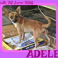 Adopt A Pet :: ADELE - Sebec, ME