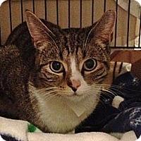 Adopt A Pet :: Tom (barn home) - Byron Center, MI