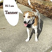 Adopt A Pet :: Tanner 2 - Franklinton, NC