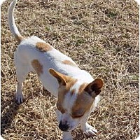 Adopt A Pet :: BRUISER - Scottsdale, AZ