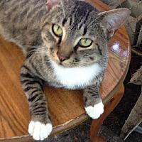 Adopt A Pet :: T.J. - Miami, FL