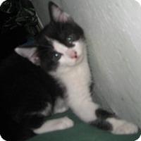 Adopt A Pet :: Myra - Dallas, TX