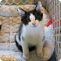 Adopt A Pet :: Gregory - Geneseo, IL