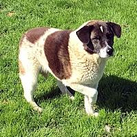 Adopt A Pet :: Marilyn - Quinlan, TX