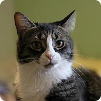 Adopt A Pet :: Gizmo and Furby - Fairfax, VA