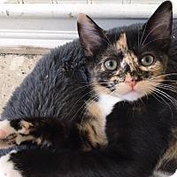 Adopt A Pet :: Vinita - St. Louis, MO