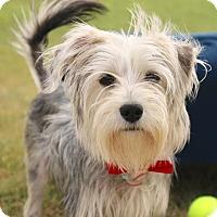 Adopt A Pet :: Owen - Carrollton, TX