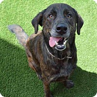 Adopt A Pet :: Marcus - Palm Bay, FL