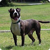 Adopt A Pet :: Rolo - Va Beach, VA