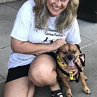 Adopt A Pet :: Albert - Charleston, WV