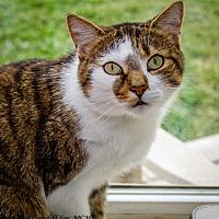 Adopt A Pet :: Tuna - Martinsville, IN