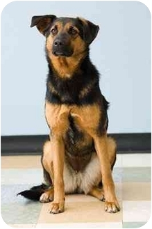 German Shepherd Dog Mix Dog for adoption in Portland, Oregon - Hannah