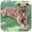 Photo 3 - German Shepherd Dog/Border Collie Mix Dog for adoption in Bellflower, California - Libby