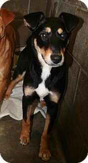Shepherd (Unknown Type) Mix Dog for adoption in Atchison, Kansas - Sally